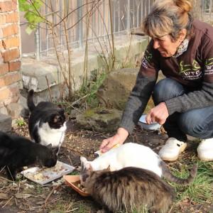 streunerkatzen-bulgarien-welttierschutzgesellschaft-katzen-füttern