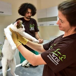 streunerkatzen-bulgarien-welttierschutzgesellschaft-katzen-tierarzt-behandlung