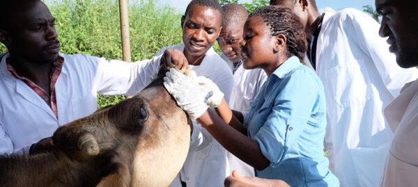 tieraerzte-weltweit-malawi-tierschutz-entwicklungshilfe-welttierschutzgesellschaft (2)