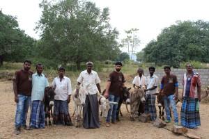 esel-indien-tierschutz-mobile-eselkliniken-welttierschutzgesellschaft