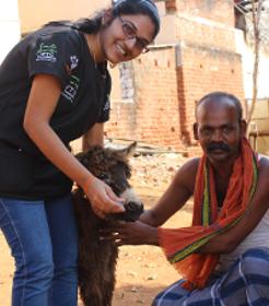 esel-indien-tierschutz-mobile-kliniken-studenten-welttierschutzgellschaft