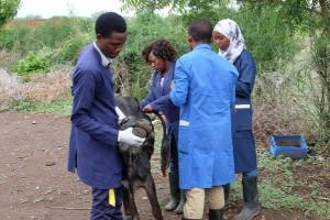 tansania-tieraerzte-weltweit-ausbildung-tierschutz-praxis-2