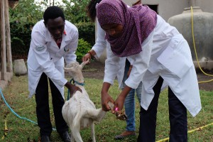 tansania-tieraerzte-weltweit-ausbildung-tierschutz-praxis