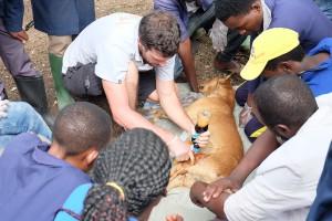 tansania-tieraerzte-weltweit-hund-tiermedizinische -versorgung-2