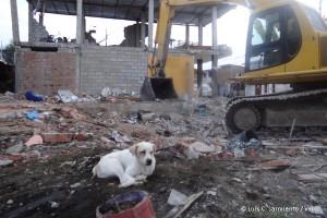 ecuador-naturkatastrophe-erdbeben-tierschutz-welttierschutzgesellschaft