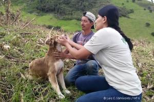 ecuador-naturkatastrophe-vulkan-tierschutz-welttierschutzgesellschaft