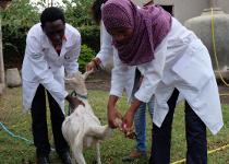 tansania-tieraerzte-weltweit-ausbildung-tierschutz-praxis-210x150