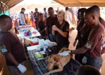 tieraerzte-weltweit-malawi-tierschutz-studenten-210x150