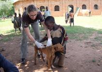 tieraerzte-weltweit-uganda-210x150