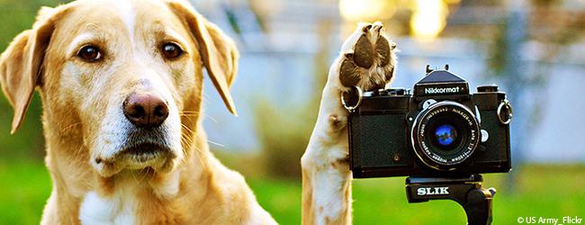 Tiere am Filmset. Wie tierschutzgerecht können Filme mit vierbeinigen Hauptdarstellern sein?