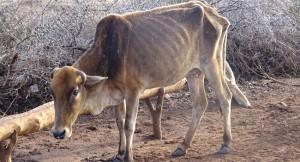 tierschutz-entwicklungshilfe-nutztier-tierhilfe-afrika-petition-650x400
