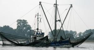 fischfang-fischkutter-fische-leiden-650x400