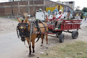tierschutz-argentinien-arbeitspferde-cartoneros-welttierschutzgesellschaft