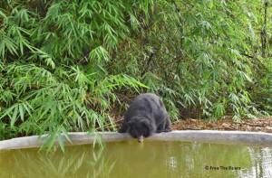 gallebaeren-schutzzentrum-kragenbaer-wasser-vietnam-welttierschutzgesellschaft