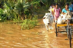 indien-flut-soforthilfe-tierschutz-welttierschutzgesellschaft