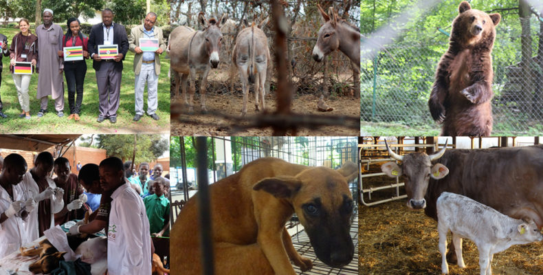 Tiergeschichten aus 20 Jahren Tierschutzarbeit