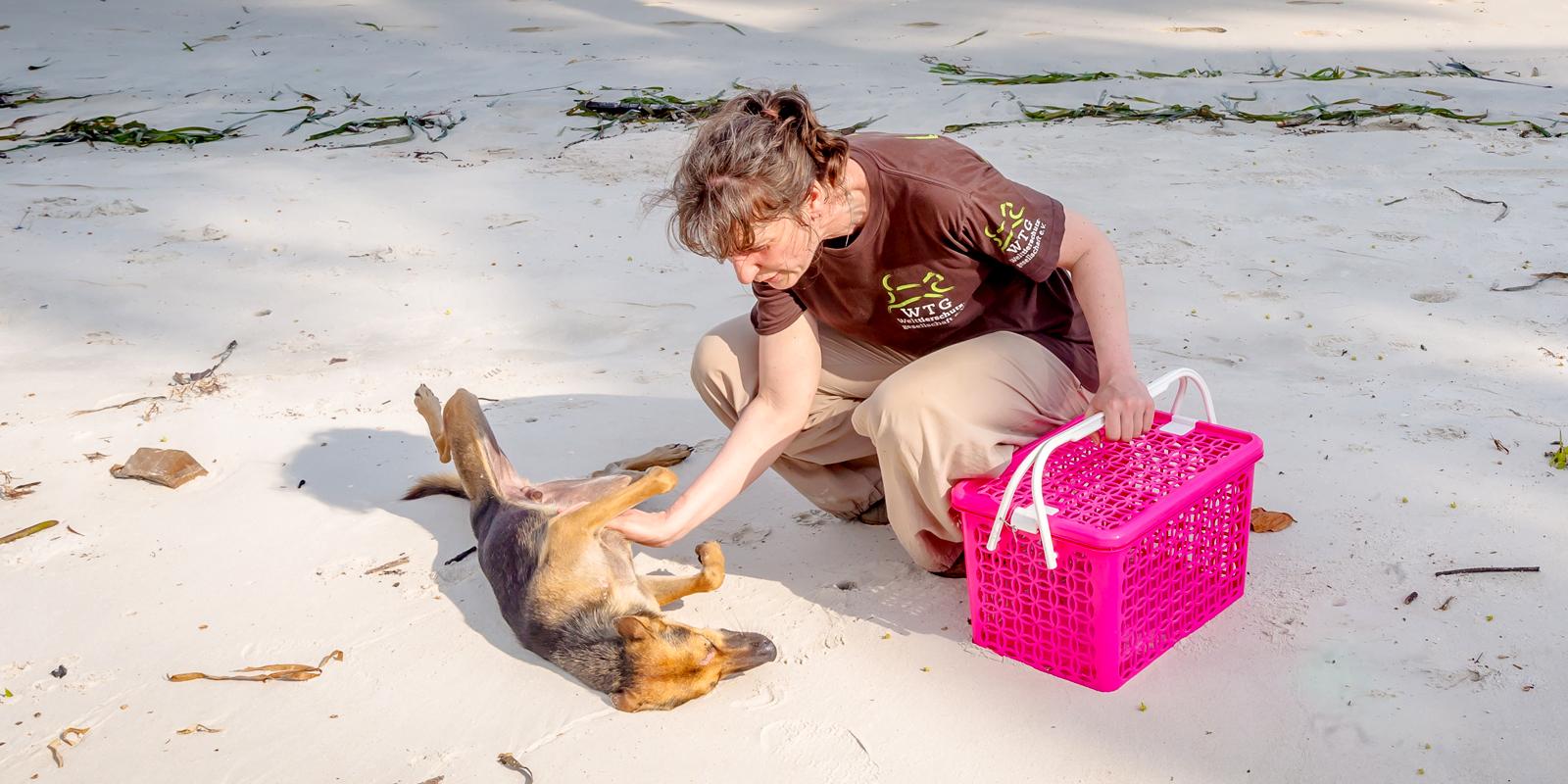 Tierklink in Thailand: Die Welttierschutzgesellschaft hilft Streunern auf Koh Lanta