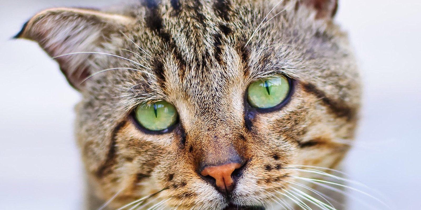 Katze schaut in Kamera
