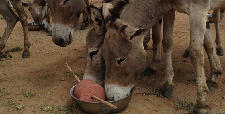 Esel und Rinder erhalten Nothilfe