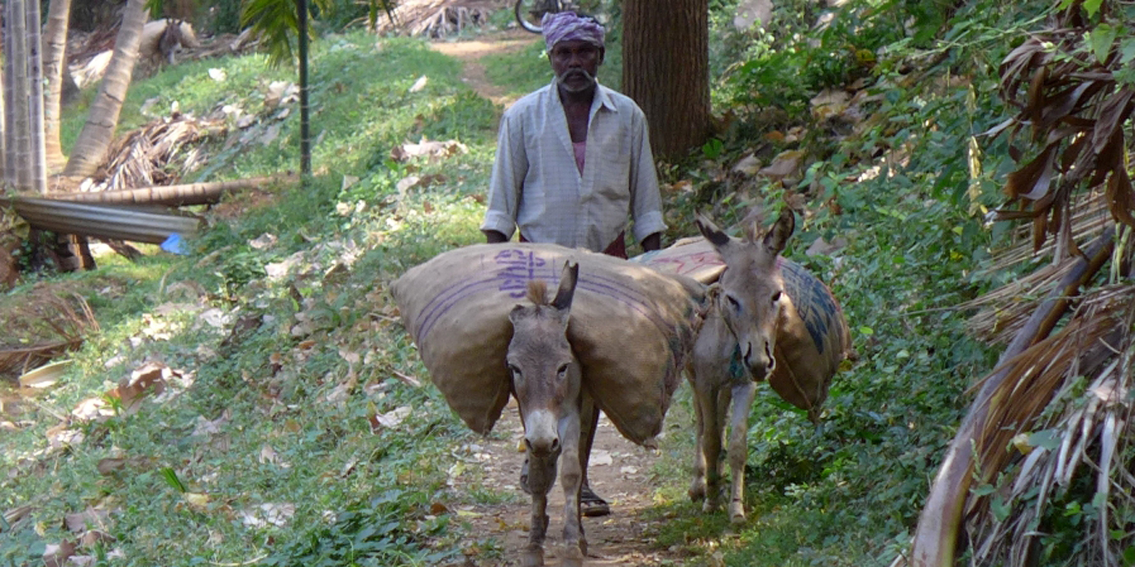 Working donkeys carrying burdens in South India
