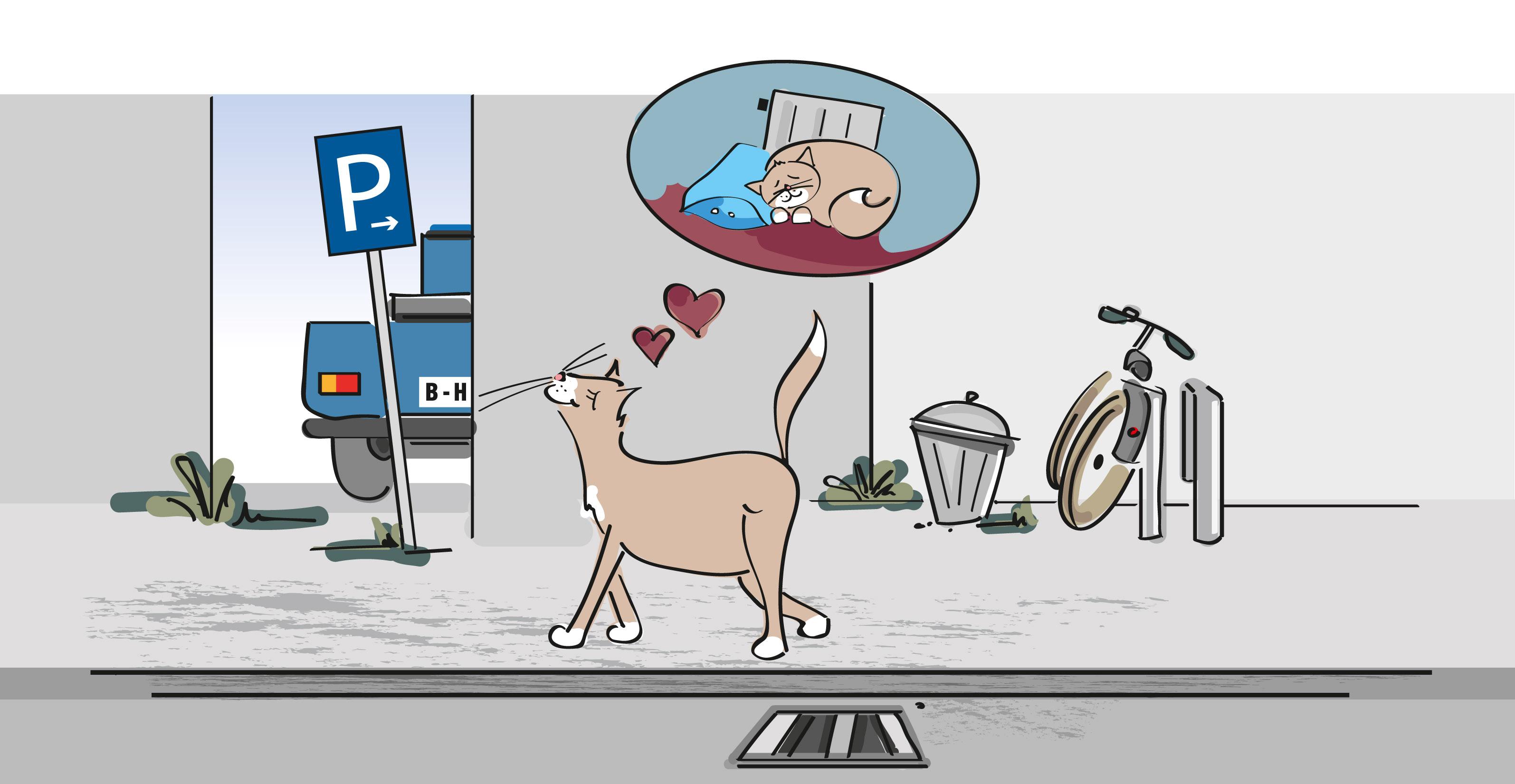 Kennzeichnung und Registrierung bieten entlaufenen Katzen Schutz