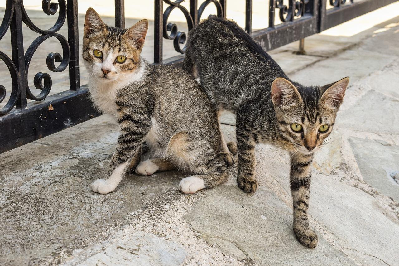 Zwei junge Katzen auf der Straße
