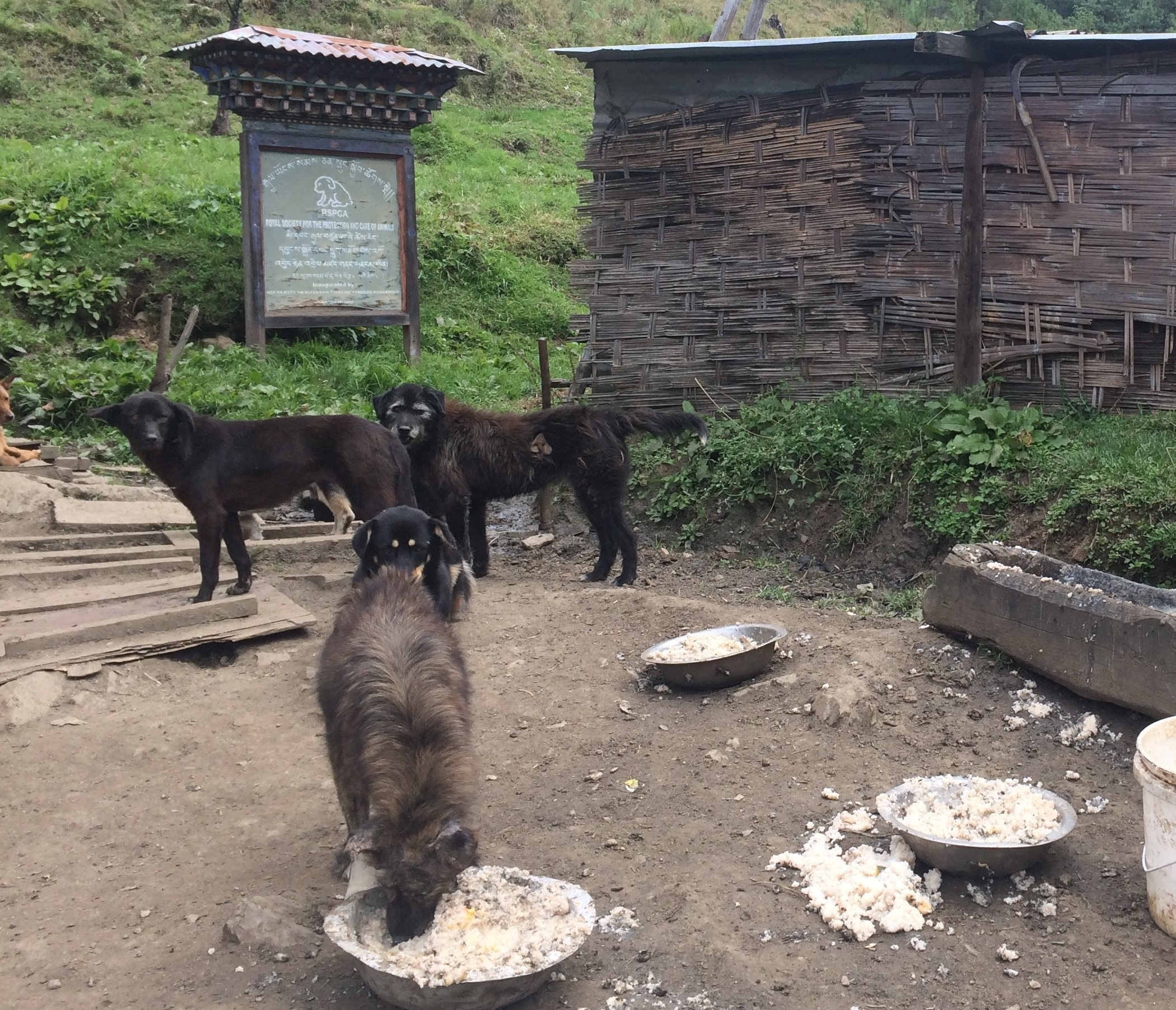 stray dogs in bhutan need to be vaccinated and neutered
