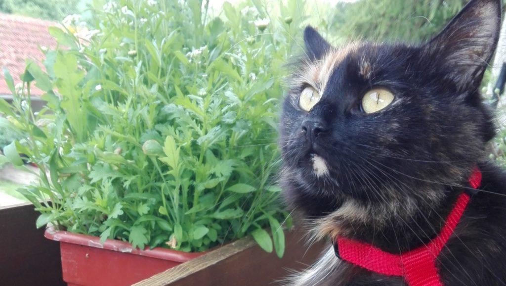 Katze aus Mamming
