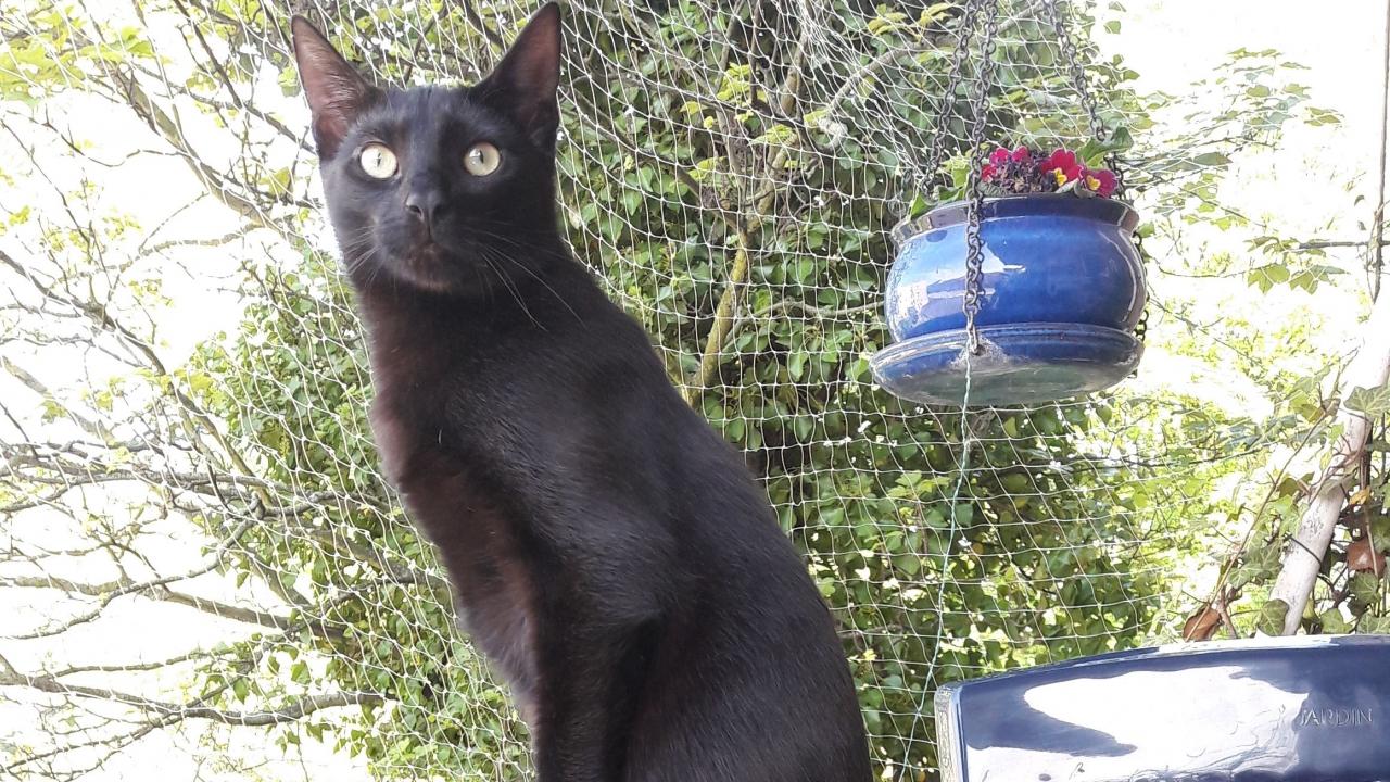 Auch diese schwarze Katze besitzt einen Katzenschutzpass