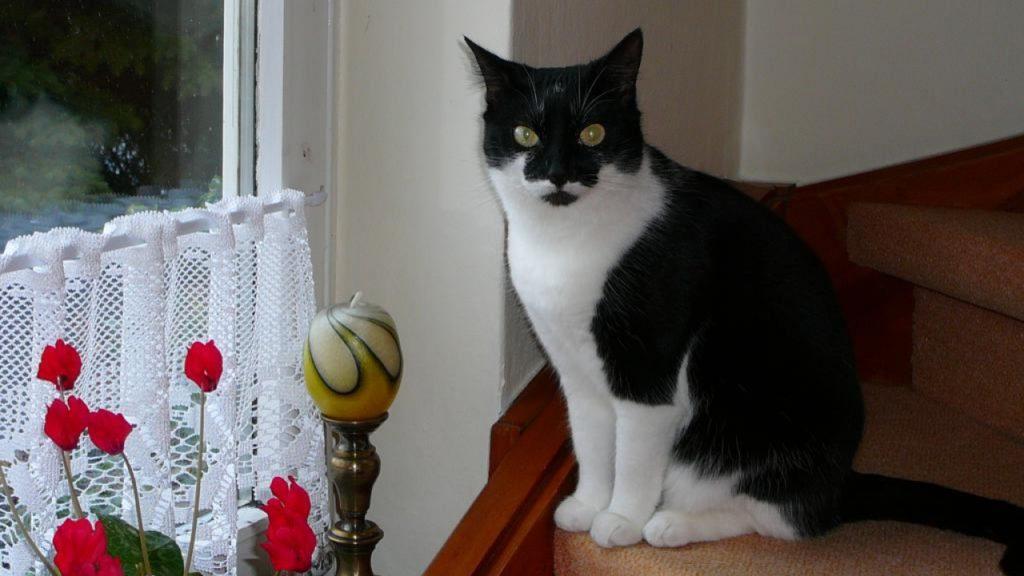 """""""Mein felliges Kind"""", nennt die Halterin ihre Katze Holly aus Meine."""