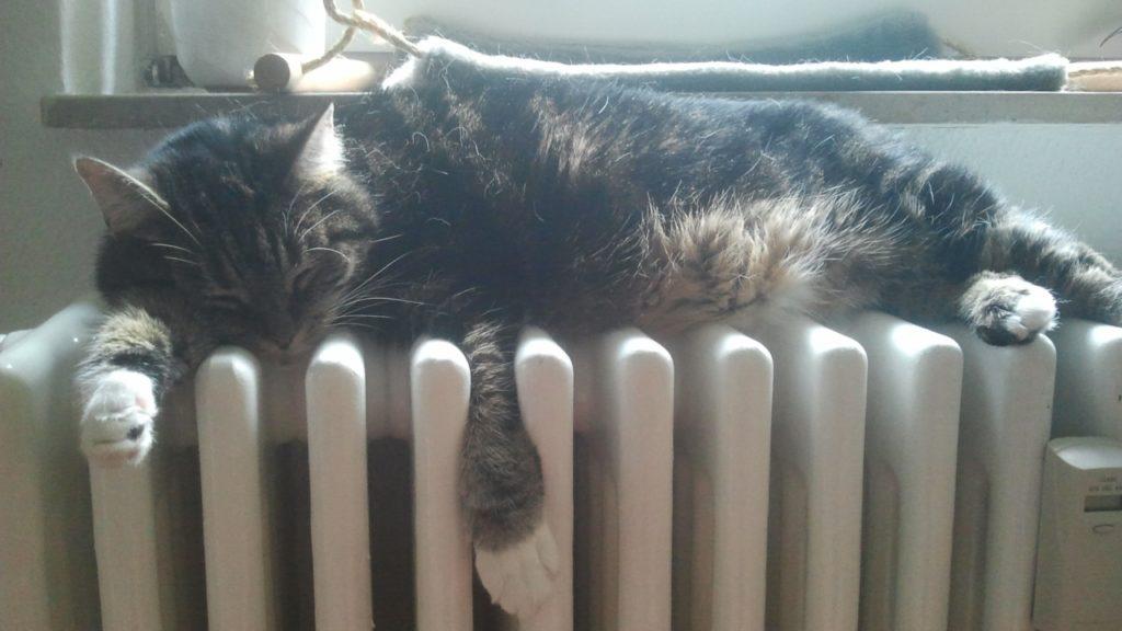 Mephista aus Berlin liebt es warm.