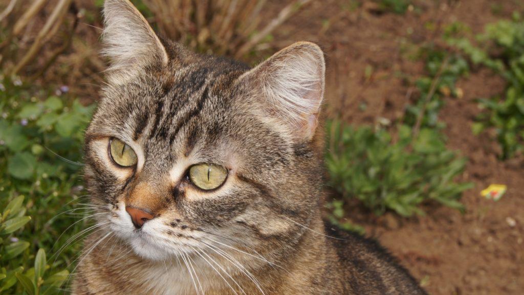 Teela aus Offenbach wurde abgemagert auf der Straße gefunden, keiner hat nach ihr gesucht. Jetzt lebt sie schon seit über sieben Jahren bei ihrer Retterin.