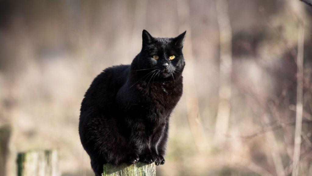 Tom aus Goch wurde aus einem lokalen Tierheim geholt. Nun lebt er seit vielen Jahren zusammen mit seinen Haltern und zwei anderen Katern in einem großen Haus mit Garten.