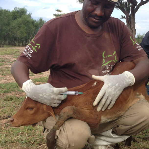 soforthilfe-tansania-regen-flut-tiere-tierschutz-welttierschutzgesellschaft-15-2
