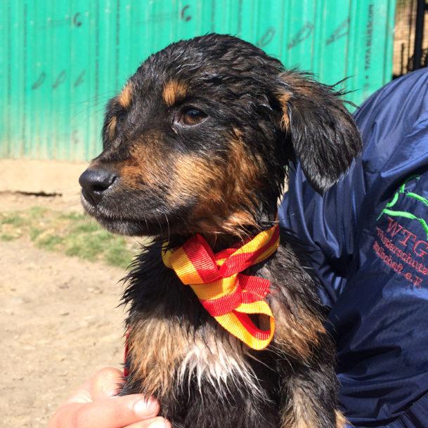 tierschutznews-mai-streuner-welpe-bhutan-hund