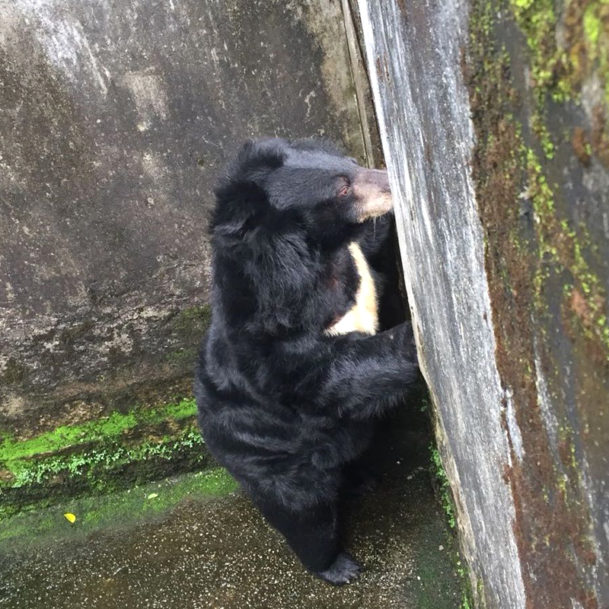 © Free The Bears-bärenrettung-vietnam-gallebären (1)