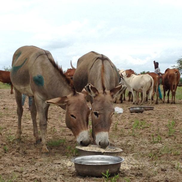©TAPO-tanzania-regen-flut-tierschutz-tierhilfe (8)