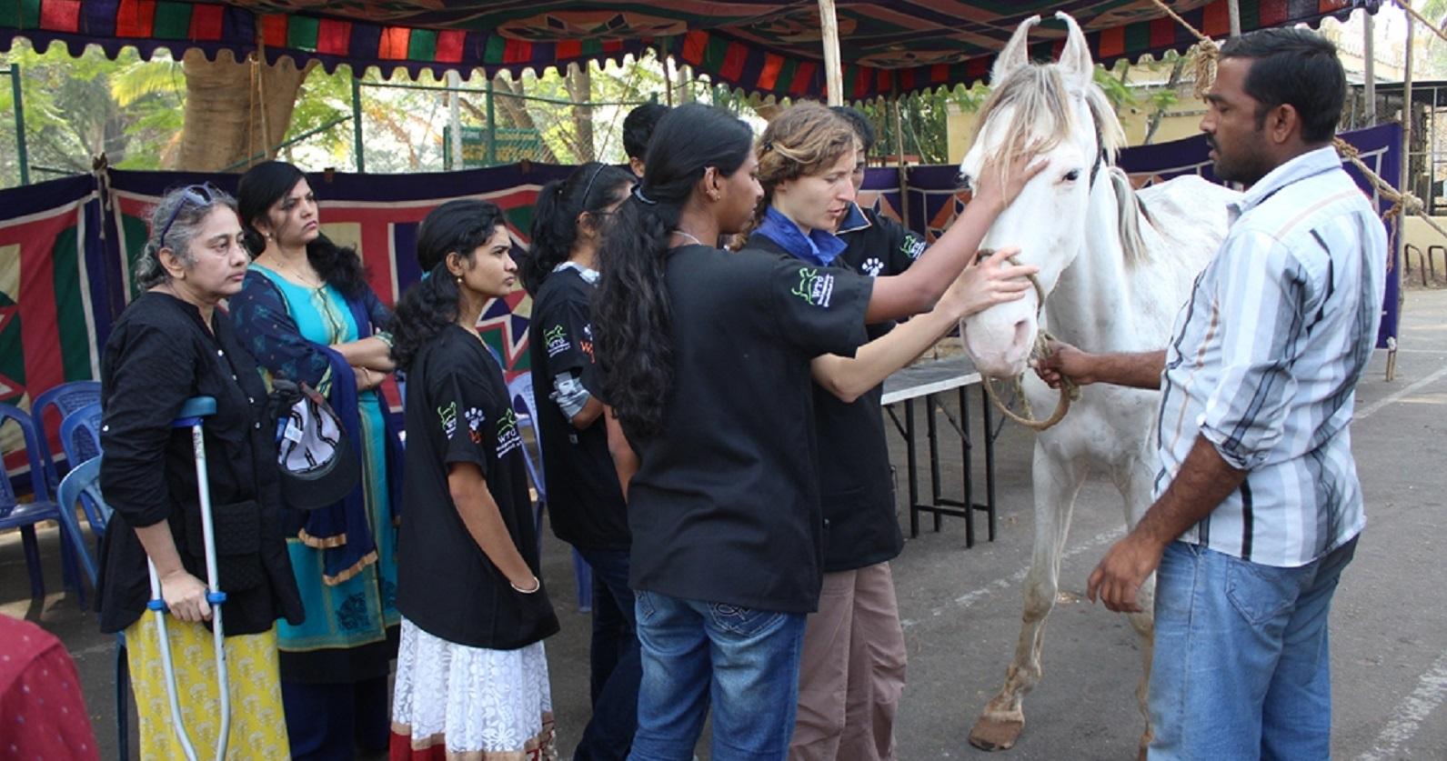 Der Besitzer wird in die Behandlung seines Pferdes miteinbezogen