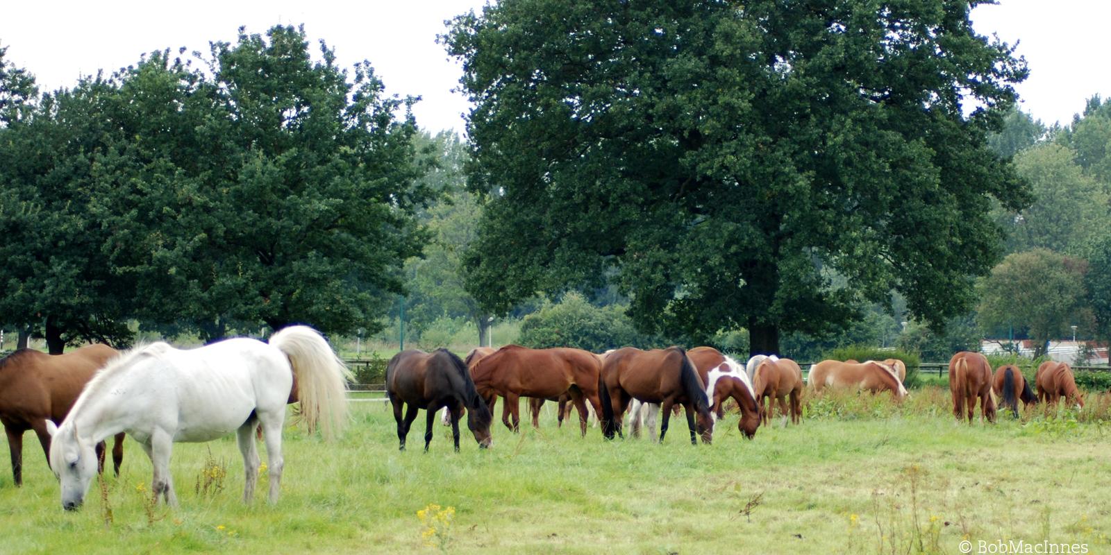Pferde auf der Weide. Der Kontakt zu anderen Pferden ist wichtig für die Tiere.
