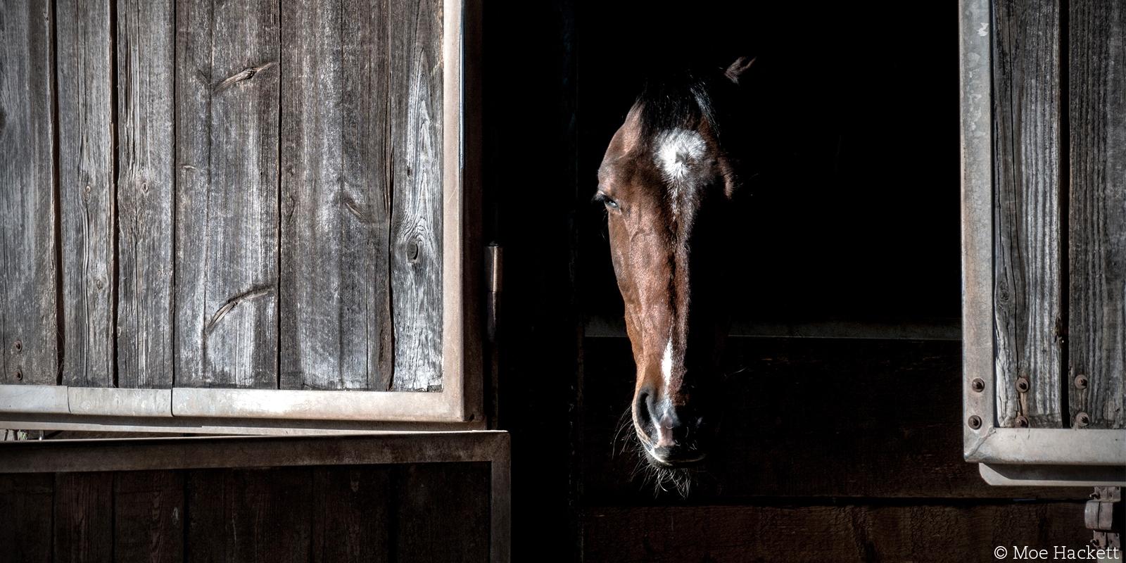 Wie geht es den Pferden in Deutschland?
