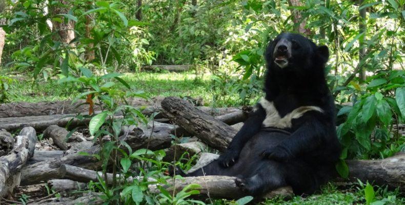 welttierschutzgesellschaft-vietnam-bären-galle-tierschutz-schutzzentrum