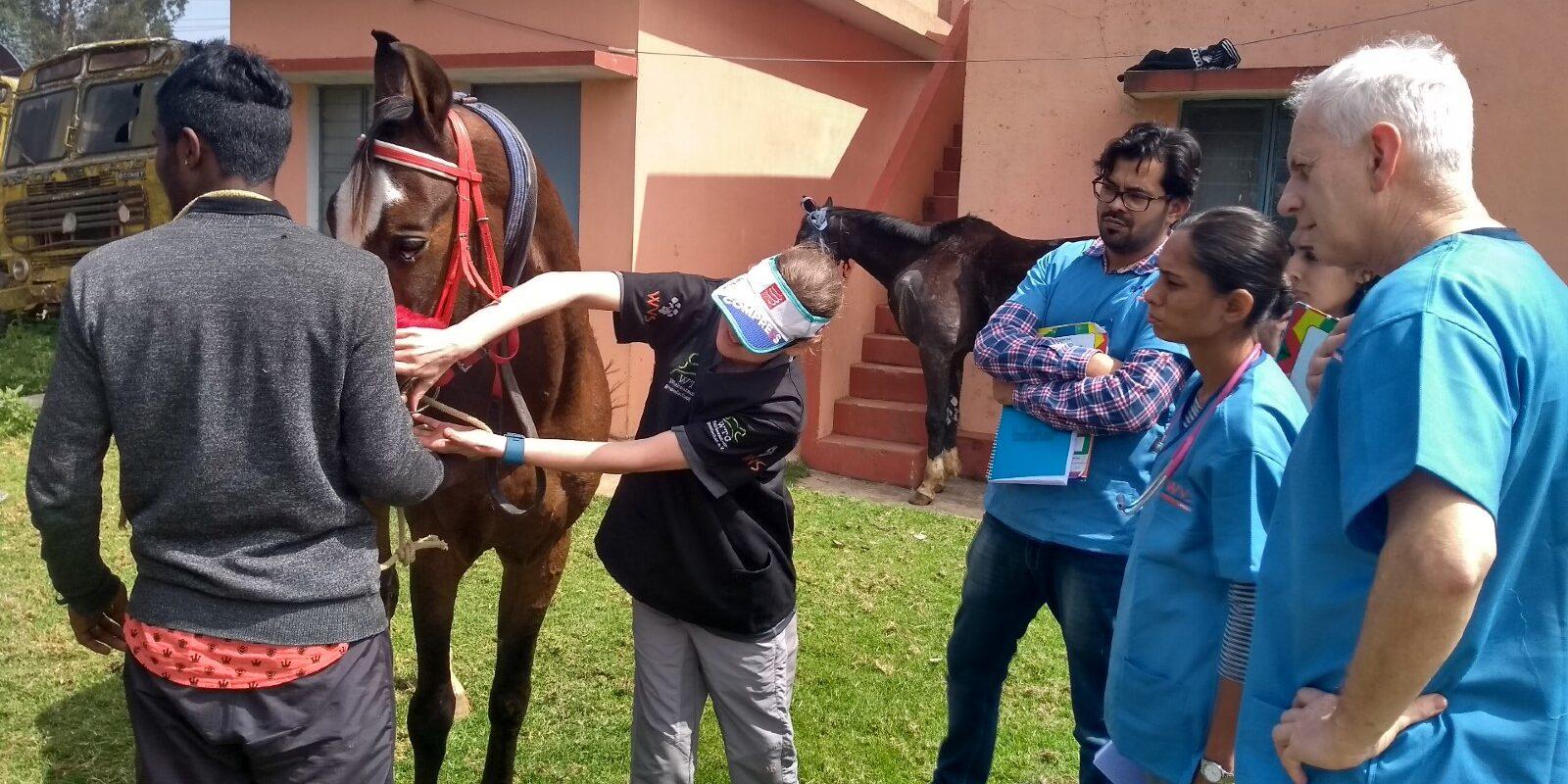 Streunende Pferde in Südindien