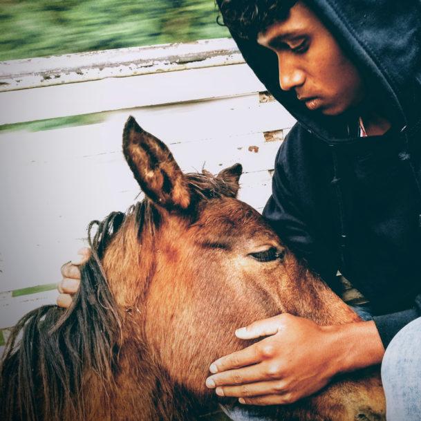 pferde-indien-hilferuf-helfen-sie-tierschutz-wtg (1)