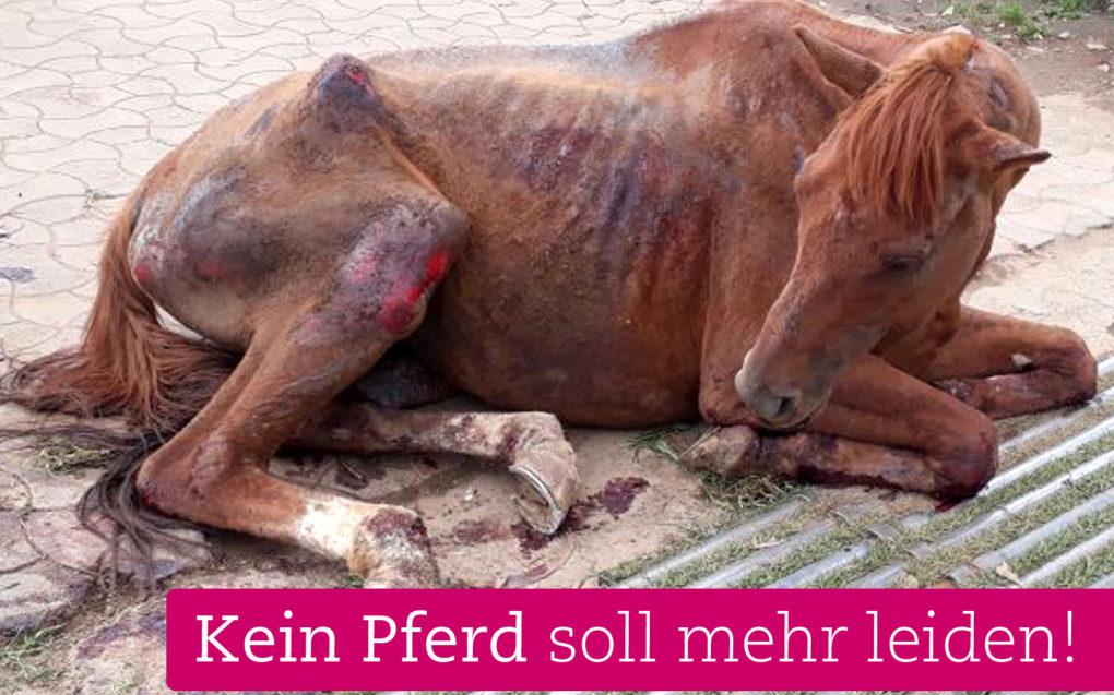 pferde-indien-hilferuf-helfen-sie-tierschutz-wtg (3)