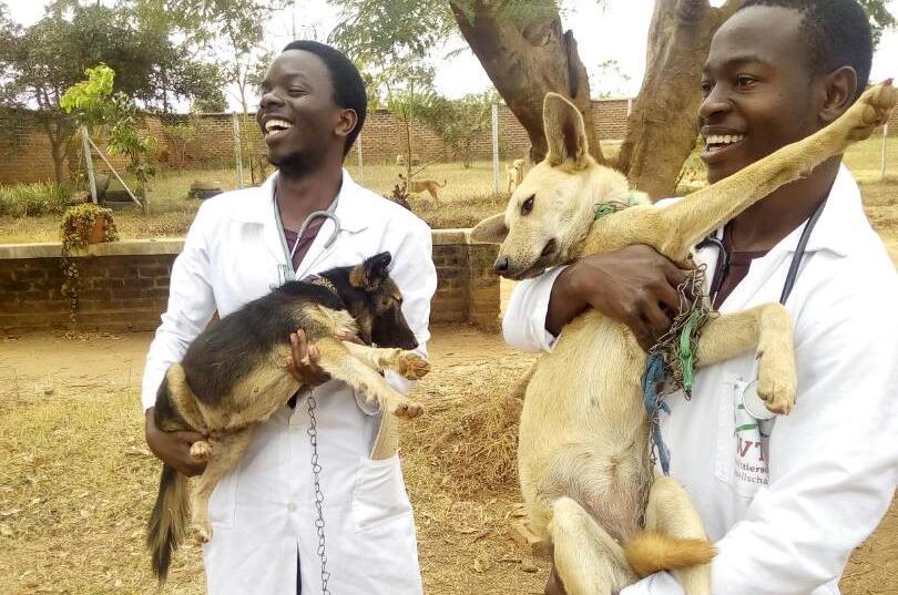 Stipendiaten mit Hunden