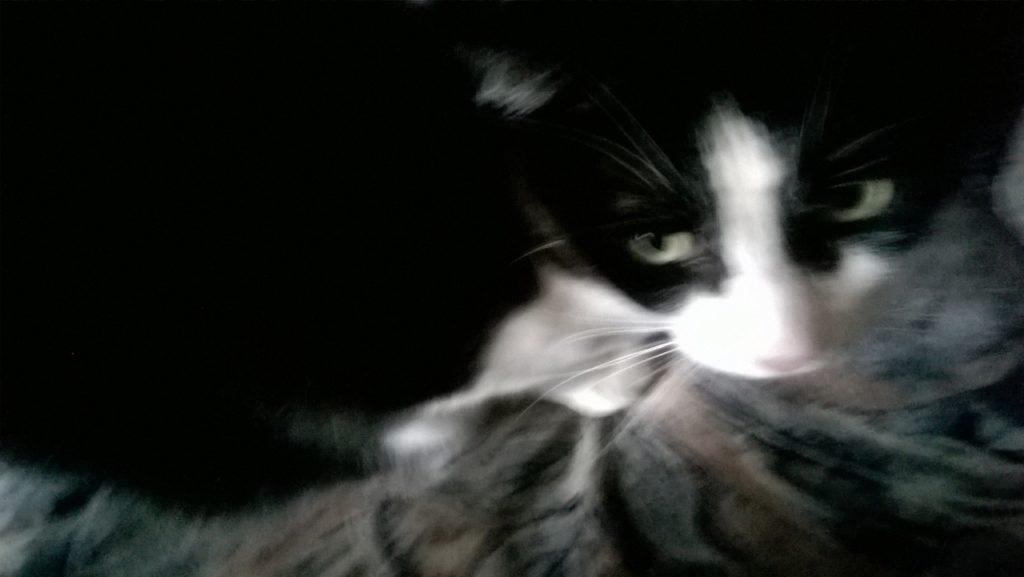 Das ist Cismo aus Katzenelnbogen.