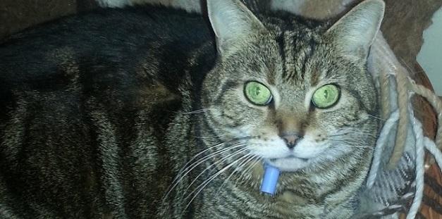 """Katze aus Remscheid ist ihrer Halterin zufolge """"sehr (verfressen und) liebebedürftig""""."""