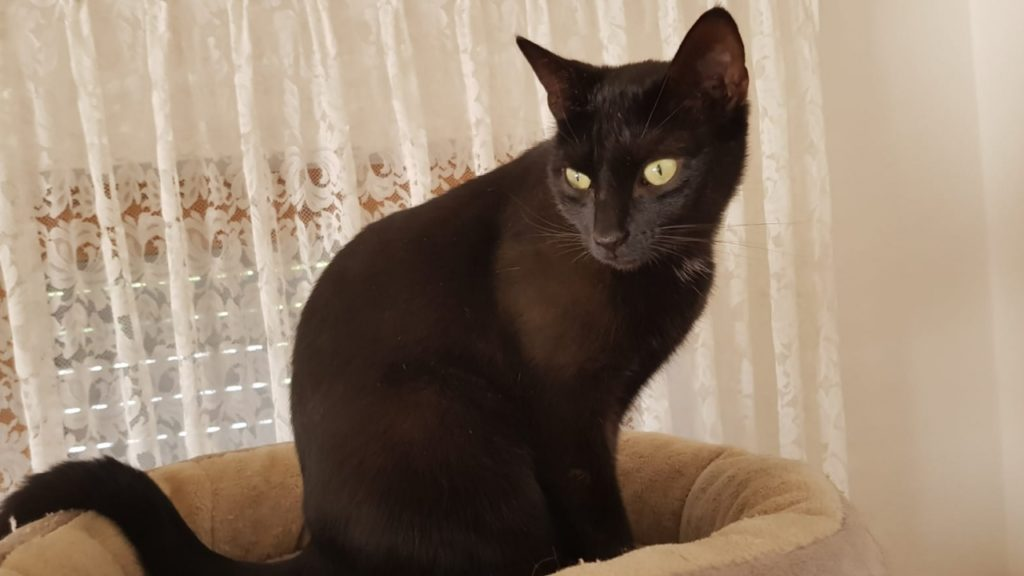 Maui aus Lauchheim ist sehr neugierig, lieb, verschmust, hat einen tollen Charakter und freut sich auch auf ihren Ausgang.