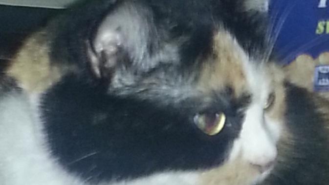"""""""Viel zu zutraulich"""", so die Halterin der Katze aus Remscheid."""
