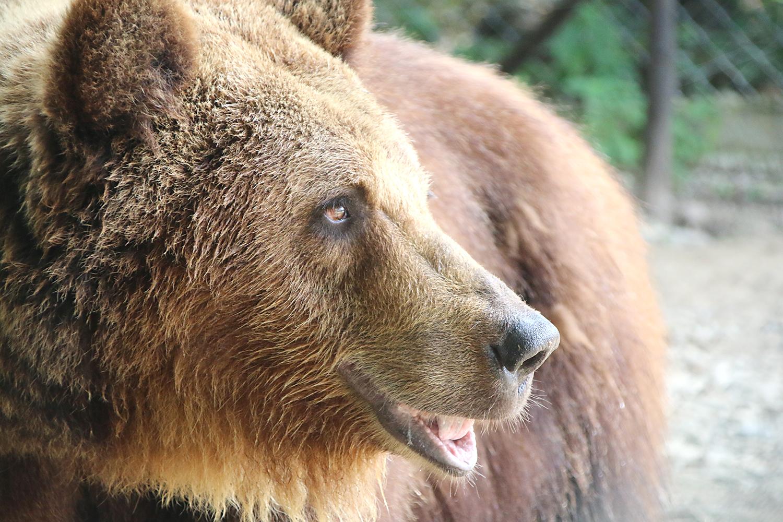 Porträt eines der geretteten Bärenweibchen